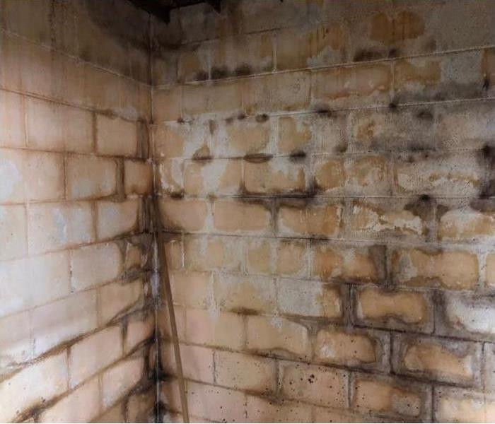 Mold growth inside a basement garage