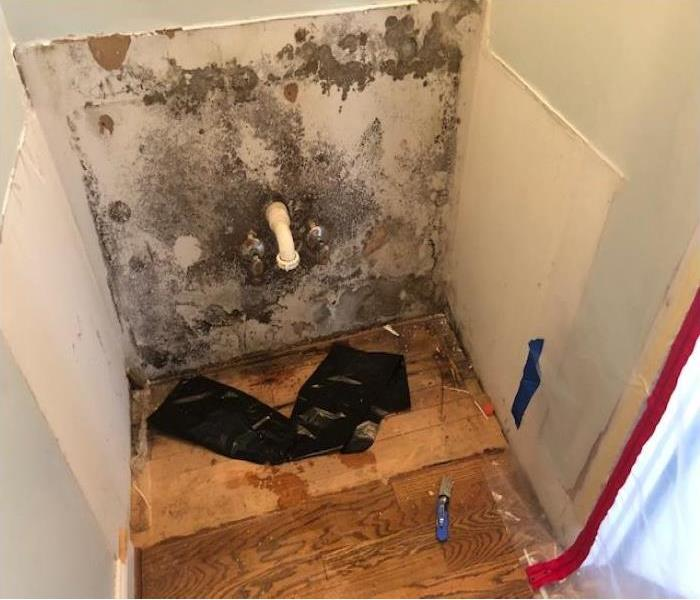 Wall covered in Brown and green mold spores from water leak in vanity